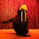 walrus1