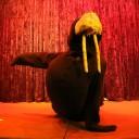 walrus6